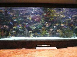 casino lobby aquarium IoT